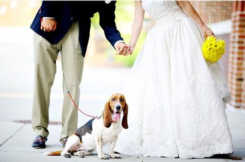 cane resiste fino al matrimonio dei proprietari