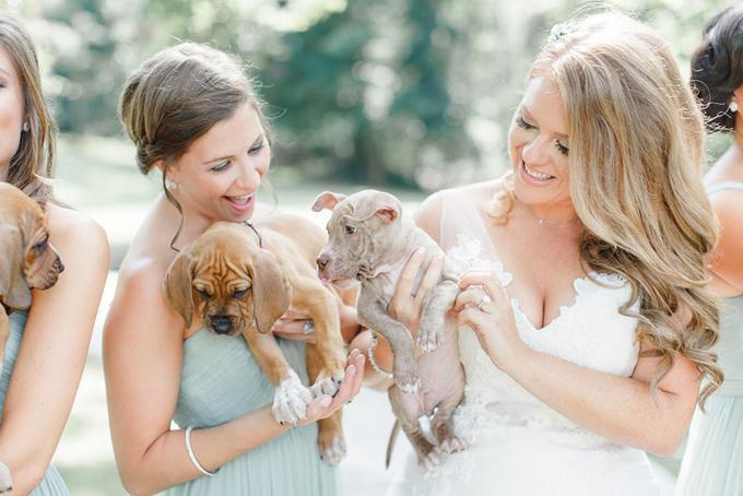 matrimonio niente bouquet ma cuccioli di cane